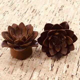 Water Lily Plugs